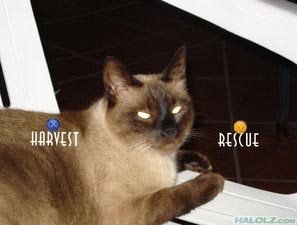 HARVEST / RESCUE