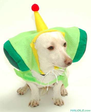 Katamari Dogmacy