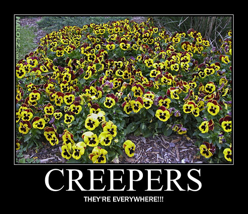Vidéos/images Minecraft Halolz-dot-com-minecraft-creeper-flowers-motivational